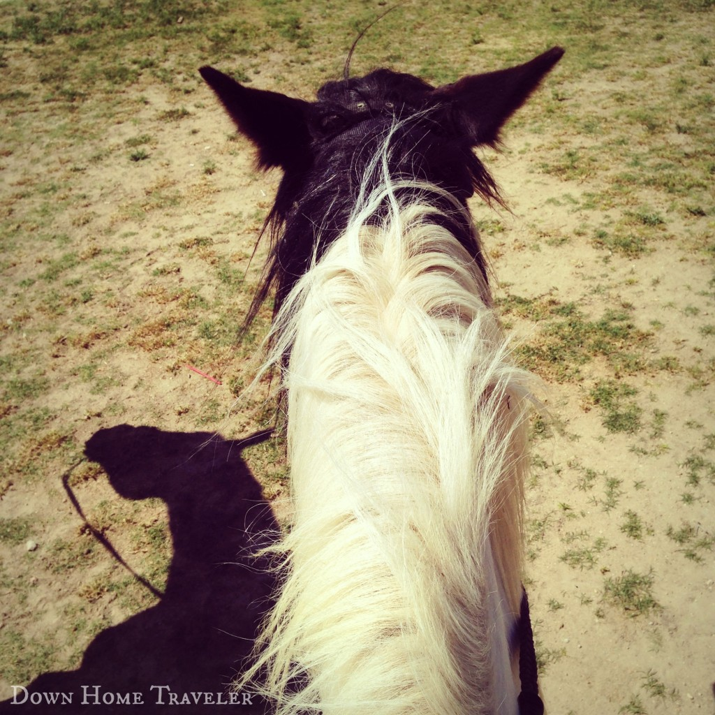Catch the Moment, Horse, Trail Ride, Texas, Benbrook Stables