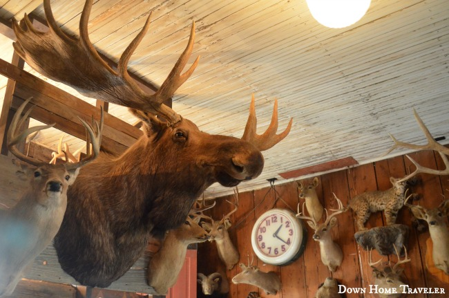 Taxidermy, Moose, Dancehall, Texas, Historic Places, Bar, Bluff-Dale, Small-Texas-Towns,