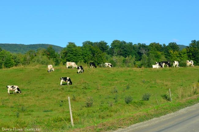 #Vermont #Animals #Cows #Dairy #DairyFarmers