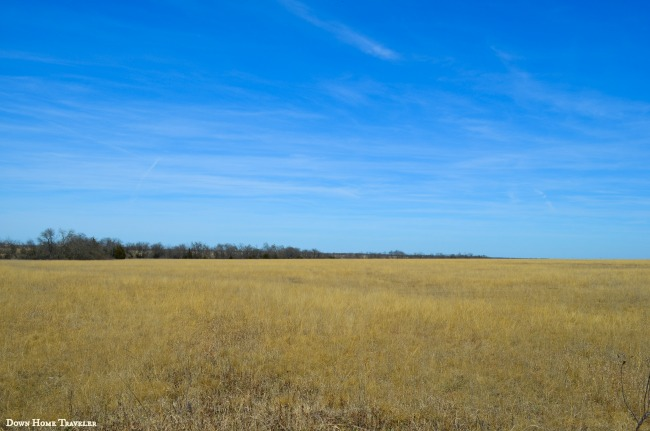 Native-Prairie-Grassland0582a