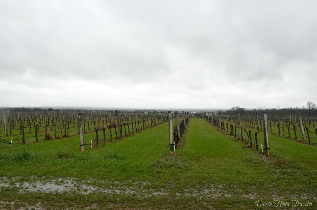 Becker-Vineyards_0234