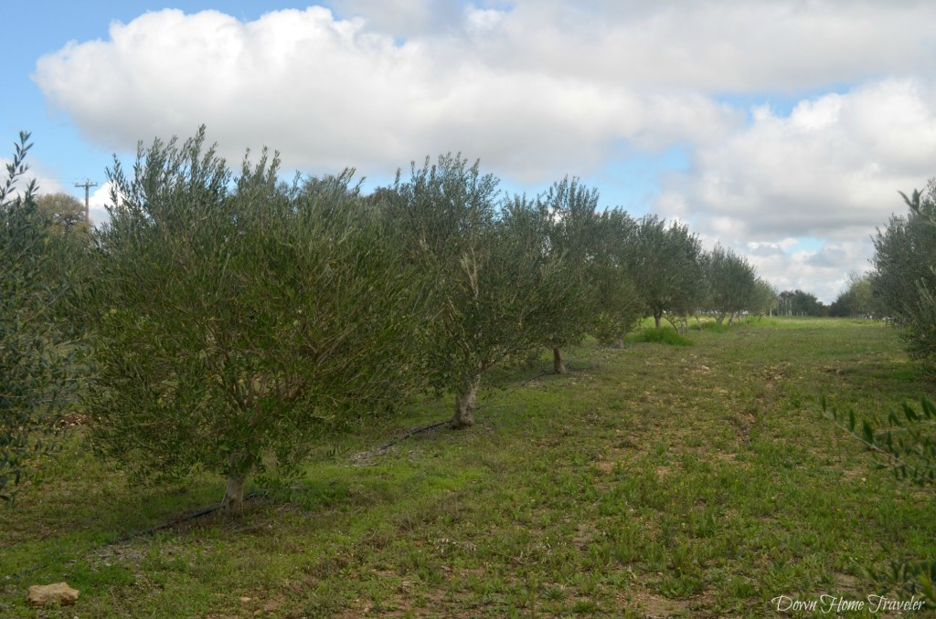 Texas-Olive-Oil-Company_0543